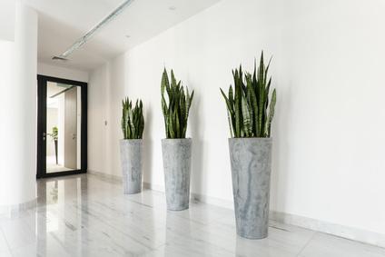 Pourquoi agrémenter vos bureaux de plantes ?